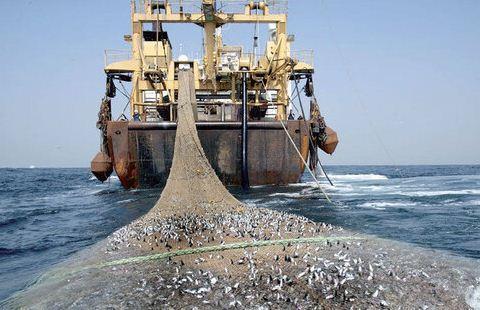 ممنوعیت 2 ساله صید ترال فانوس ماهیان