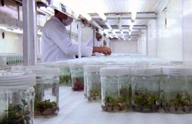 برنامه 10 ساله فناوری و فرآوری گیاهان دارویی تدوین شد